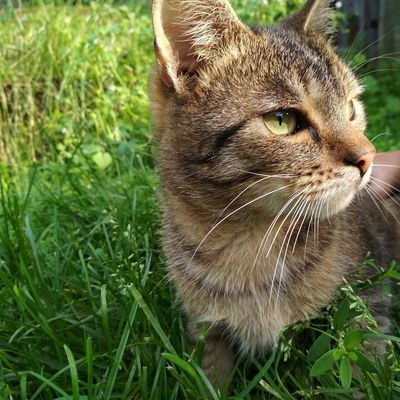 Pet Portraits One Animal Grass Domestic Animals Animal Themes Domestic Cat Pets Day Nature Outdoors