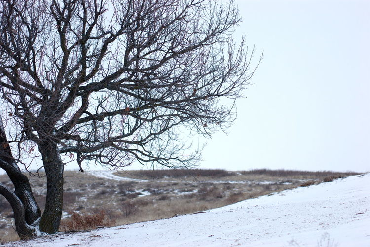 Bare tree on snowy landscape against clear sky