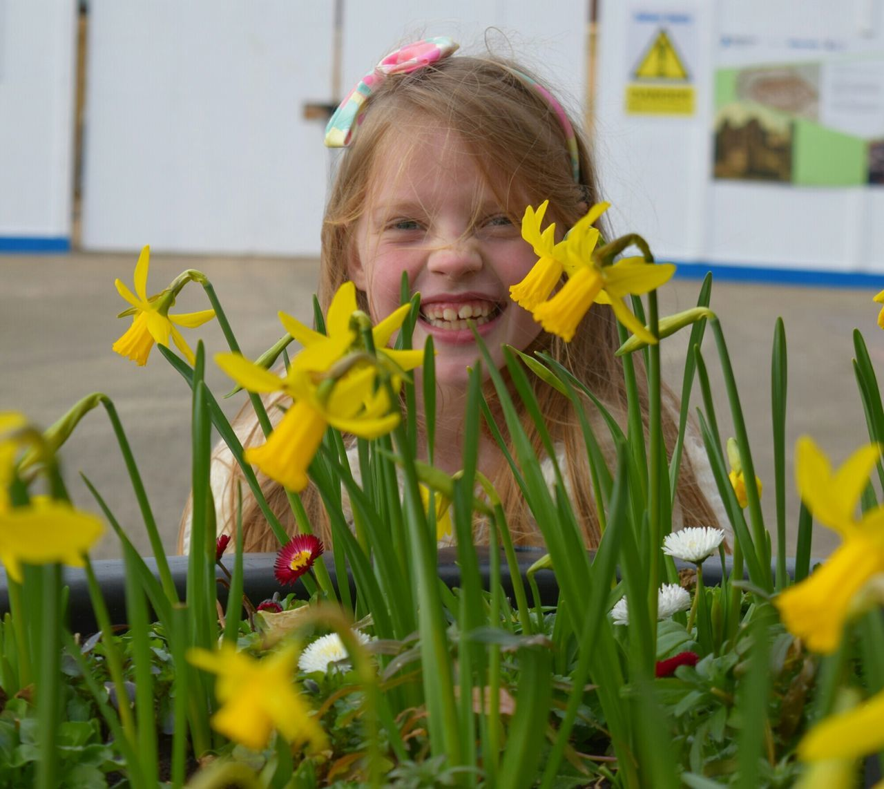 Close-Up Of Daffodils In Front Of Cheerful Girl