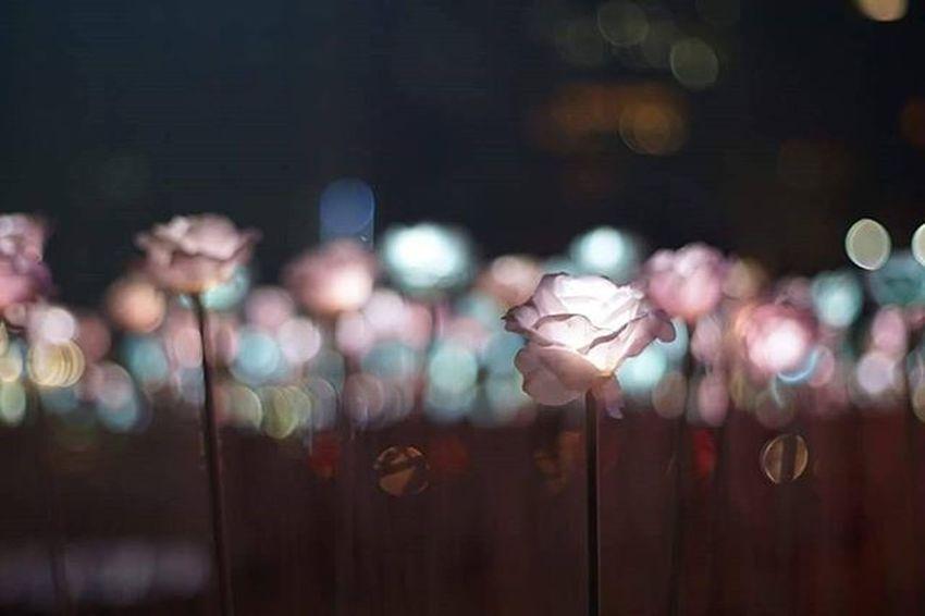 Seoul Seoulplaza LED Roses Flowers Korea Southkorea Travel Lighting Ledroses Garden Winter Architecture Night Countouringmakeup