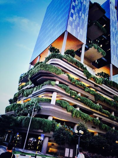 Singapore Low Angle View Sky Built Structure Architecture Building Exterior No People Day Decoration Outdoors Christmas Plant Tree Nature christmas tree Cloud - Sky Building Christmas Decoration Celebration Religion