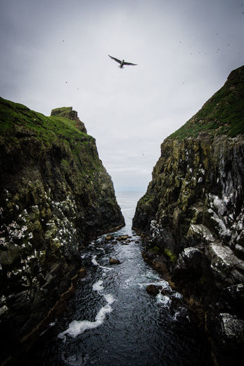 Low angle view of bird flying over sea amidst mountains