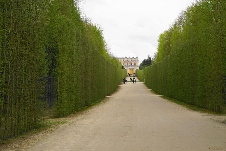 château de versailles Château De Versailles  Paris Versailles Beauty In Nature Day Diminishing Perspective Direction Footpath Green Color Growth Incidental People Lifestyles Nature Outdoors Palace Plant Real People Rear View Road Sky Spring The Way Forward Transportation Tree Walking