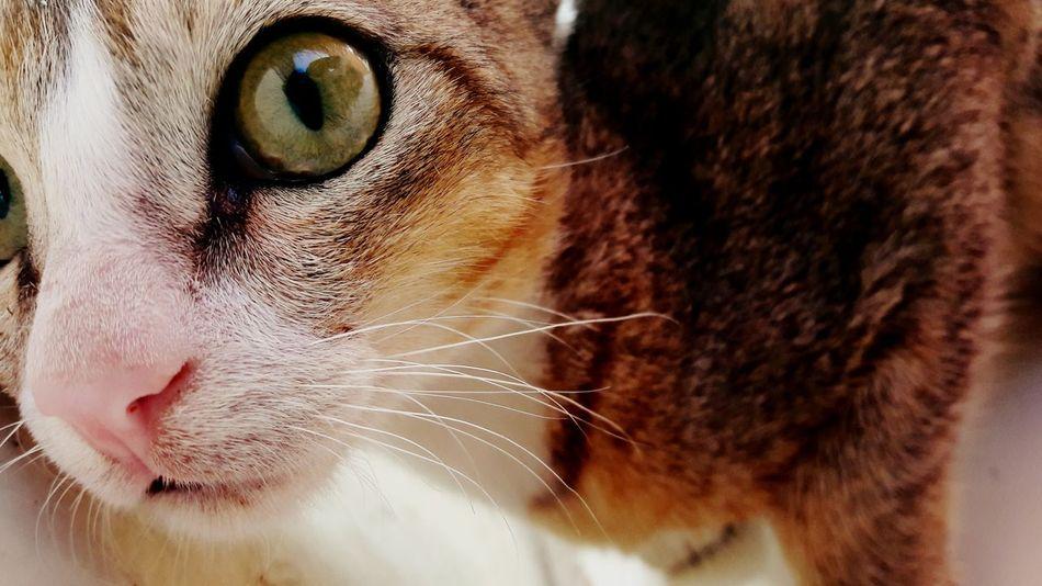One Animal Domestic Cat Close-up Looking Away Funnymoment Animal Hair Animal Themes Animal Nose Animal Eye