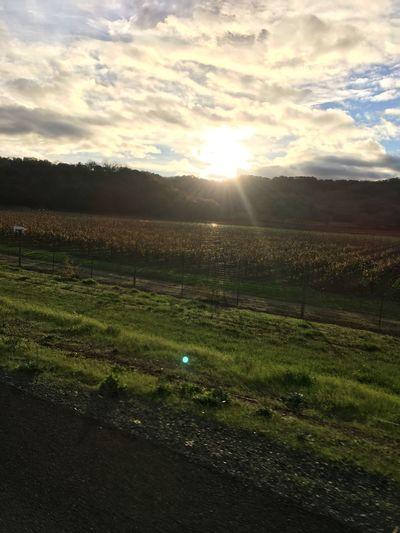 No Filter Nature Sunlight Winefields Hopland