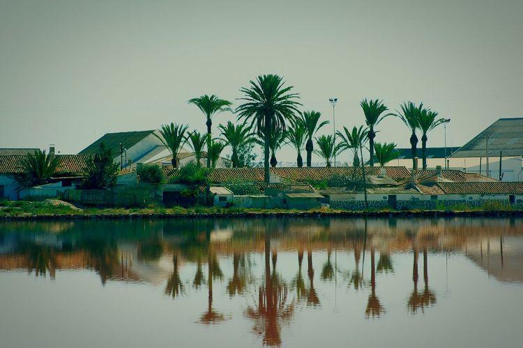 Reflection Wasser Palmtree Palmen