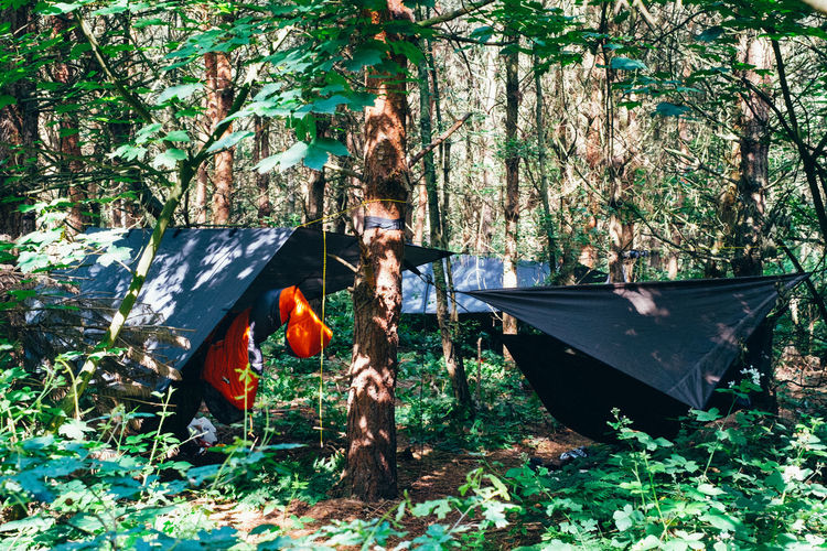Camping Hiking Day Environment Forest Grass Growth Hammock Land Mode Of Transportation Nature No People Orange Color Outdoors Plant Tarps Tranquility Transportation Tree Tree Trunk Trunk Water WoodLand