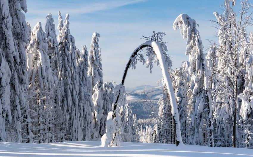 Panoramic shot of frozen trees on land