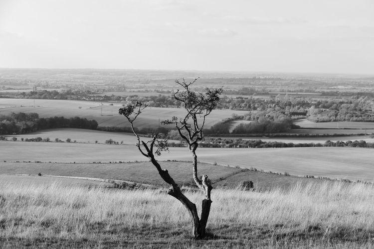 """""""Still Branches"""