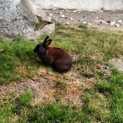Richmond Steveston Rabbit Bunny  kawaii canadaday japaneseheritage holiday beautifulbritishcolumbia