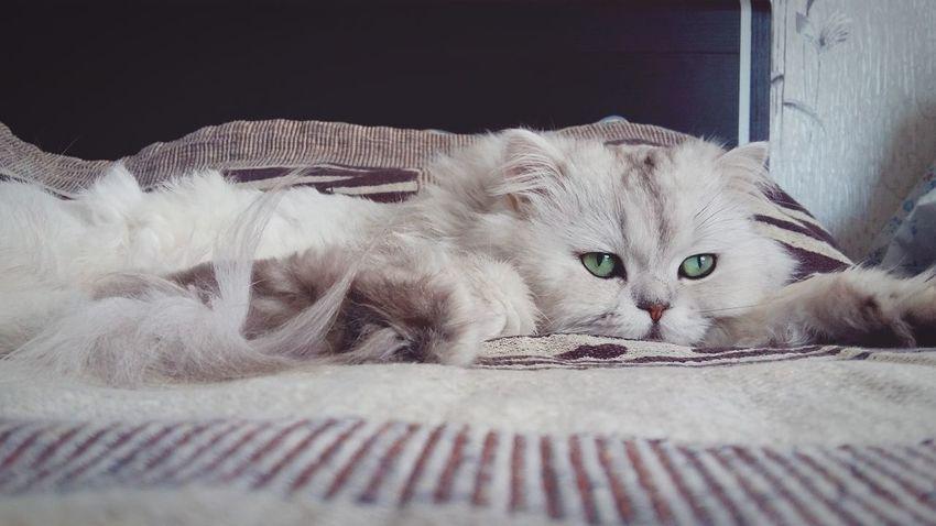 I Love My Cat ❤ Cat Sleep Time