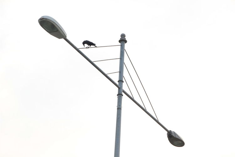 Low Angle View Of Raven Perching On Street Light Against Clear Sky