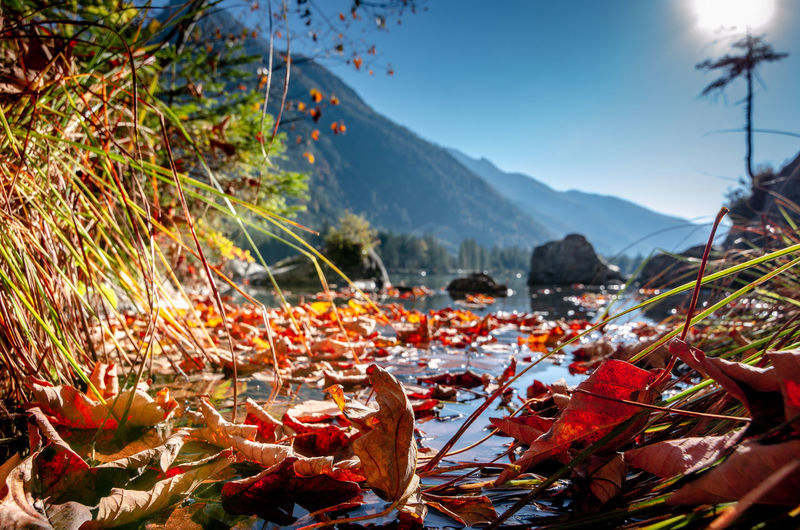 Close-up of autumn leaves on mountain against sky