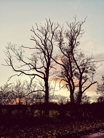 Tree Light EyeEmNewHere Countryside Fieldscape Autumn colors Walking Discovery Outdoors Leaves Overcast Fence Bird Tree Branch Sunset Pixelated Silhouette Bare Tree Sky Landscape