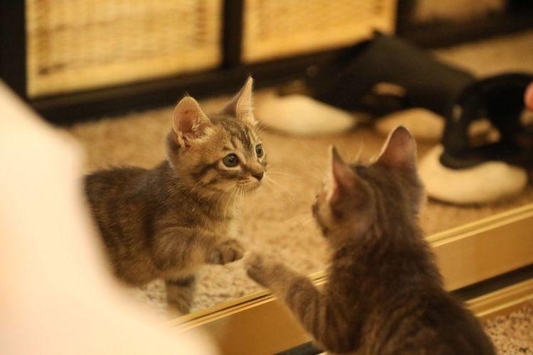 Close-up of kitten sitting