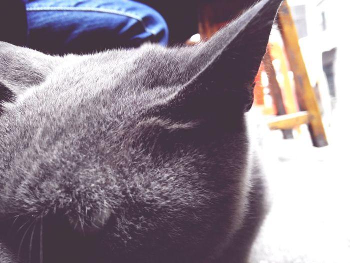 上班地方的猫咪 很乖但是没人养它 好伤心:( 日常
