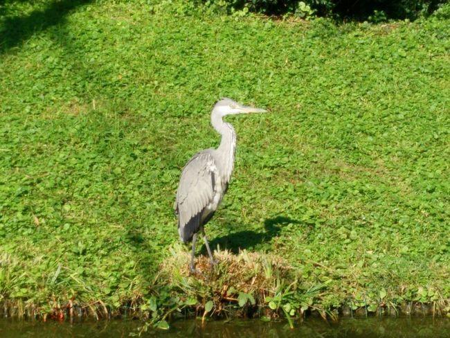 Wildlife Nature Bird Green Grass Zoo Caughtinthemoment Animal Beautiful Creature