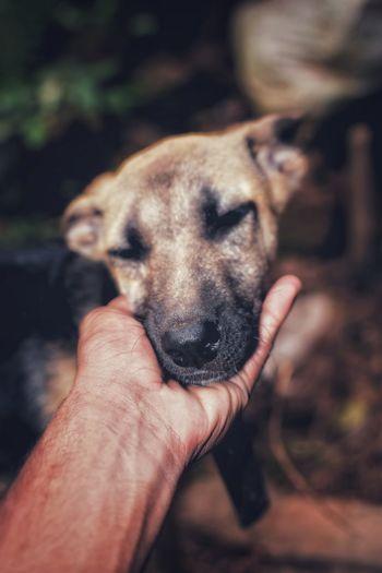 Close-up of man holding dog