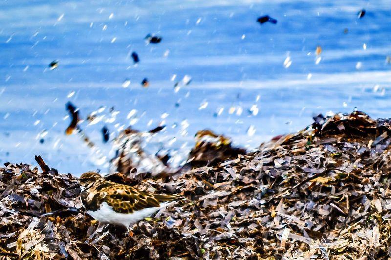 Bird Perching On Garbage Dump