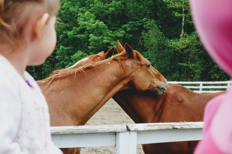 Side view of girl looking at horses in barn