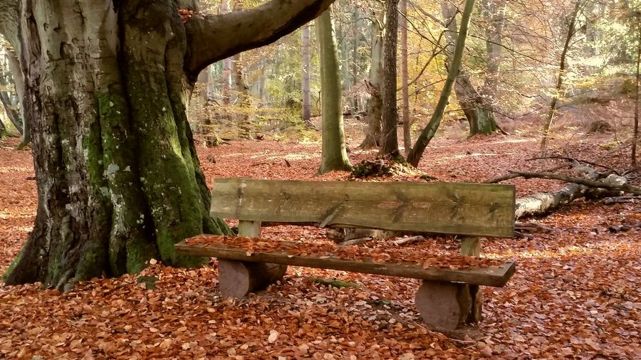 Spaziergang Herbstlicher Darßwald Nature Beauty In Nature Tree Outdoors No People Sunlight Autumn Tranquility Relaxing Forest 🍂🍁🍂