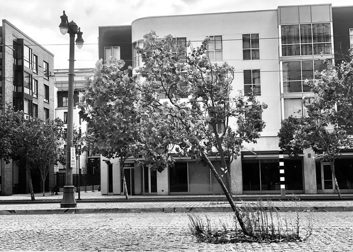 Tree by building in city