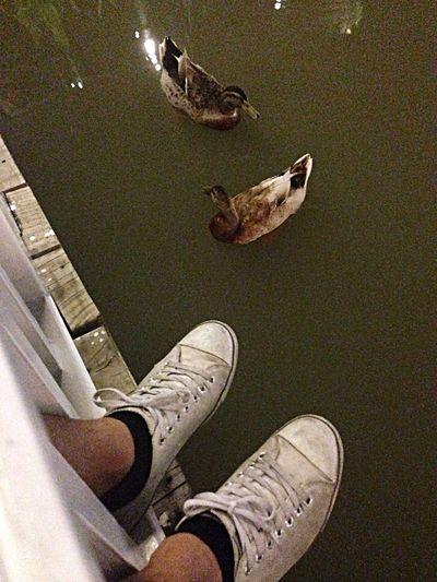 Ducks Chillin Night Shoes