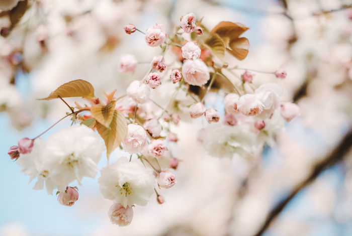 Photo Studio Pink Cherry Flowers Trees Baby Photography Backdrops Printed Toy Bear Balloons Green Grass Kids Spring Blossoms Photo Background Fragrant Aroma