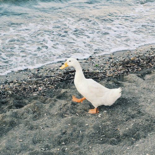 Holiday POV Pretty Seaside Living Holidays ☀