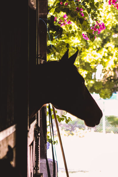 Farm Horses Ranch Animal Themes Backgrounds Competition Equestrian Lake View Mammal No People Paso Fino Stable Water