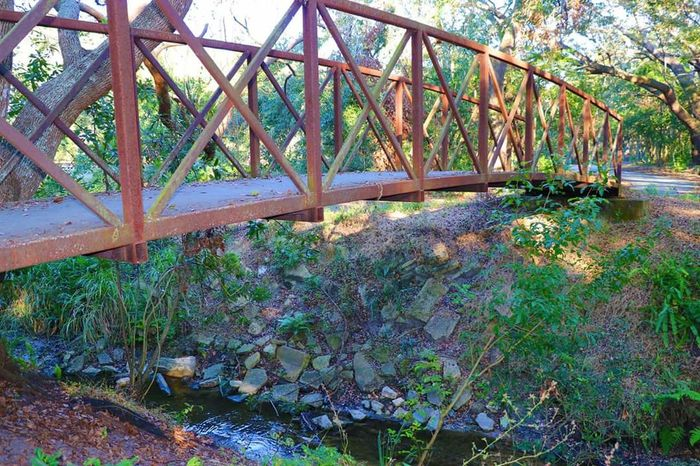 My butterfly's retreat Bridge Over Water Hikingphotography Hiking Trail Water Plant Growth Outdoors Day No People