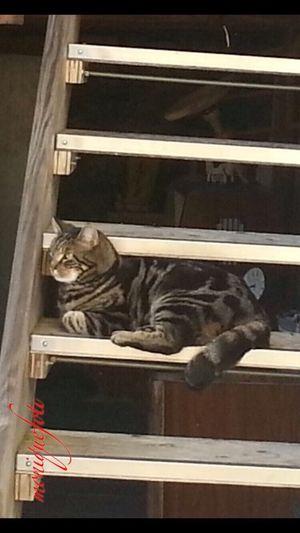 """Das ist """"Mau"""", die Mietzekatze vom Geschäft. 💕💗 Monique52 Miezekatze Katze Katzenliebe Haustier Iphonephotography Iphone6"""