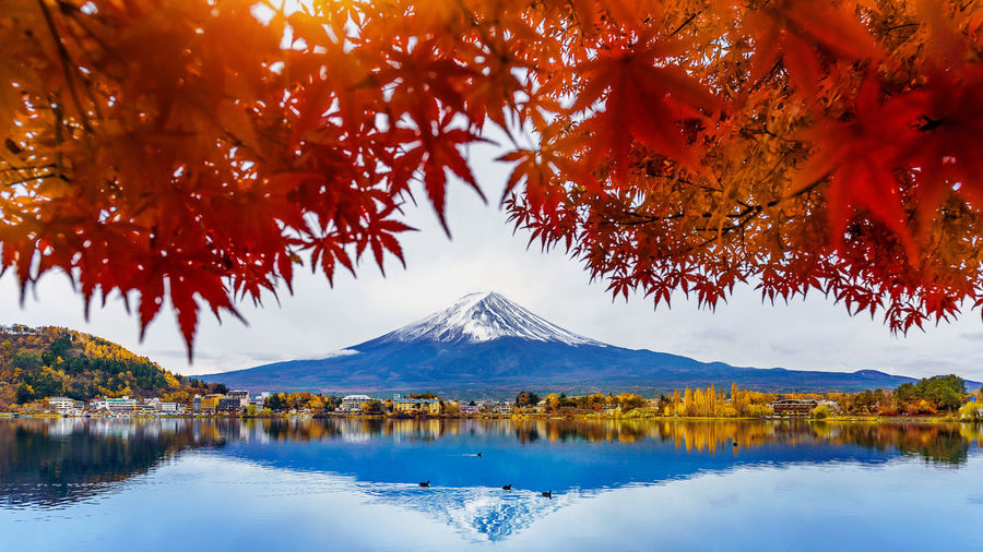 Autumn Season and Fuji mountain at Kawaguchiko lake, Japan. Autumn Autumn Collection Beauty In Nature Change Cold Temperature Day Lake Mountain Mountain Peak Nature No People Outdoors Plant Reflection Scenics - Nature Sky Snowcapped Mountain Tranquil Scene Tranquility Tree Water Waterfront