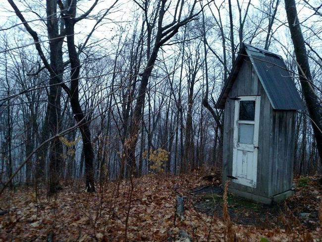 Architecture Autumn Autumn Bare Tree Beauty In Nature Branch Building Exterior Built Structure Day Forest Leaves Only Leaves Nature No People Outdoors Outhouse Outhouse In The Woods Outhouseinthewoods Sky Tree Vermont Vermont Autum