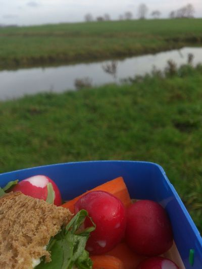 The Purist (no Edit, No Filter) Picknick November On My Way Groninger Hoogeland