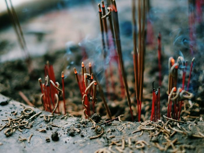 Close-up on burning incense at temple