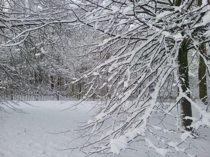 Snow Cold Temperature Winter Tree Plant Beauty In Nature Branch