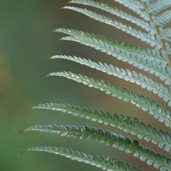 green abstract plant ferns leaves in the nature Fern Plant Leaf Leaves Floral Garden Nature Abstract Textured  Beauty In Nature Beautiful Romantic Green Freshness Backgrounds Wallpaper