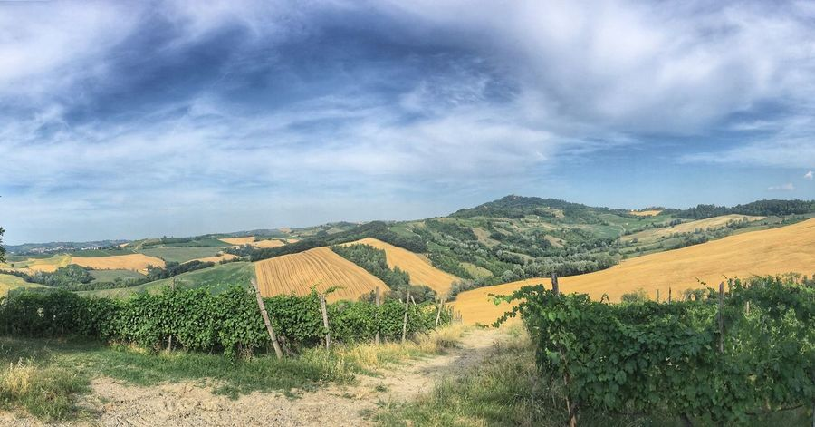 🌾 Landscape Tranquil Scene Tranquility Beauty In Nature Nature Scenics Sky Field Agriculture Day No People Cloud - Sky Rural Scene Outdoors Italy Sunny Day Countryside Italia Lombardia