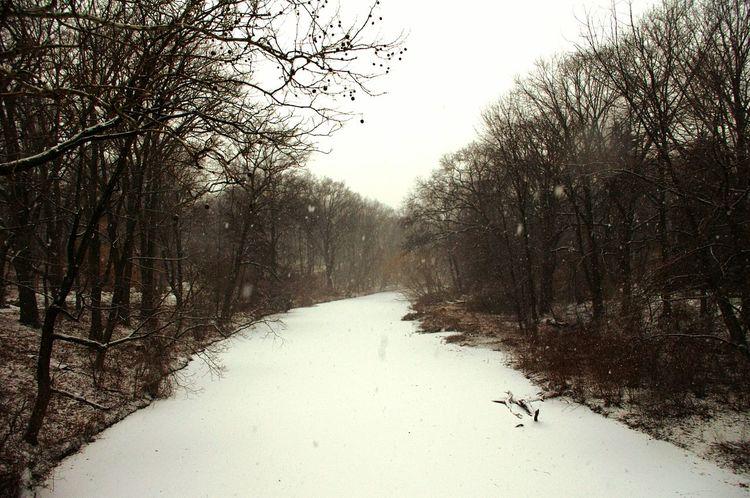 Snow Snowy Scene Snowytrees Snowyriver Winter Trees BronxRiver Whiteriver Bronx, New York TheBronxIsBeautiful