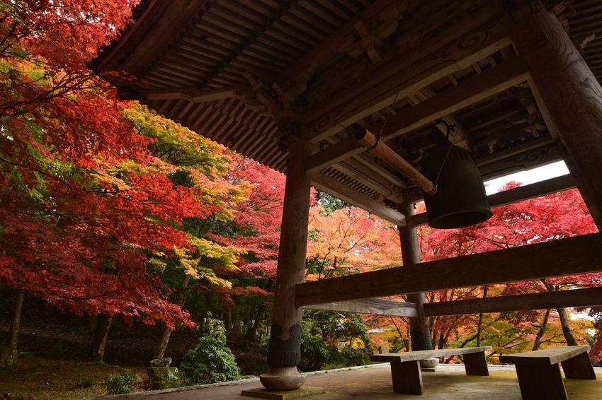 紅葉 梵鐘 鐘 Japan Photography Autumn ファインダー越しの私の世界 写真で伝えたい EyeEm Best Shots Eyemphotography 11月 EyeEm Japan Beauty In Nature EyeEm Nature Lover Temple
