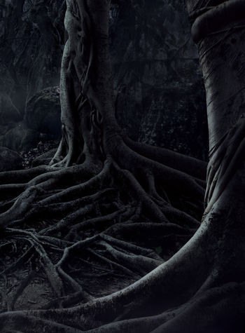 Scary trees with big roots on night misty forest. Halloween wallpaper. Dark Evil Fear Halloween Horror Moon Tree Wood Beauty In Nature Blackandwhite Branch Crows Dangerous Day Dead Dead Tree Evening Forest Mist Mood Moonlight Mystery Nature Night Nightmare No People Outdoors Root Roots Of Tree Scary Scenics Shadow Spooky Tranquil Scene Tranquility Tree Tree Trunk