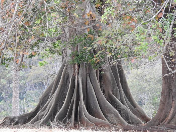 Tree Close-up