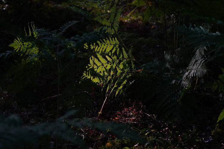 Beauty In Nature Branch Day Fern Forest Green Color Growth High Angle View Lake Land Leaf Leaves Light And Shadow Nature No People Outdoors Plant Plant Part Tranquility Tree Water