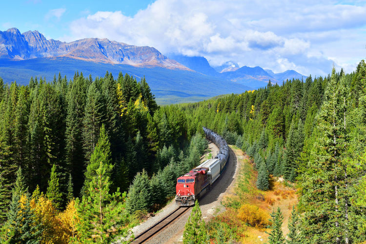 Train passing famous Morant's curve at Bow Valley in autumn ,Banff National Park, Canadian Rockies,Canada. Banff  Banff National Park  Banff Alberta Bow Valley Canadian Canadian Pacific Railway Morant's Curve Transportation Travel Bow Valley Canada Landscape Mountain Park Rockies Train Way