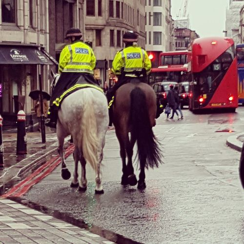 Police London London Police Metropolitan Police Police Horse Domestic Animals Men Horse Mammal Real People Rear View Adult Adventures In The City The Street Photographer - 2018 EyeEm Awards