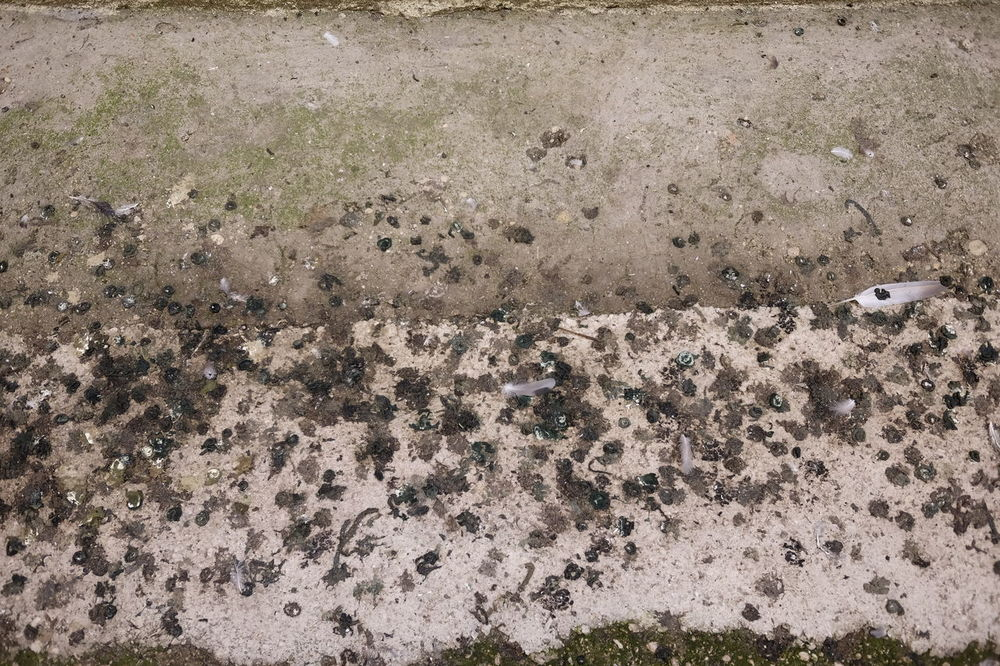 Bird Day Droppings Excrement Guano Outdoors Pigeons Surface