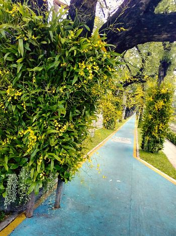Sideways Sidewalk Along The Way Tree Ornamental Plant Plant On Tree Orchid Orchid Flower Orchid On Tree View Landscape View Photography Landscape Photography Perspective Perspective Photography Nature Nature Photography Orchids Collection Flower On The Tree Flower Collection
