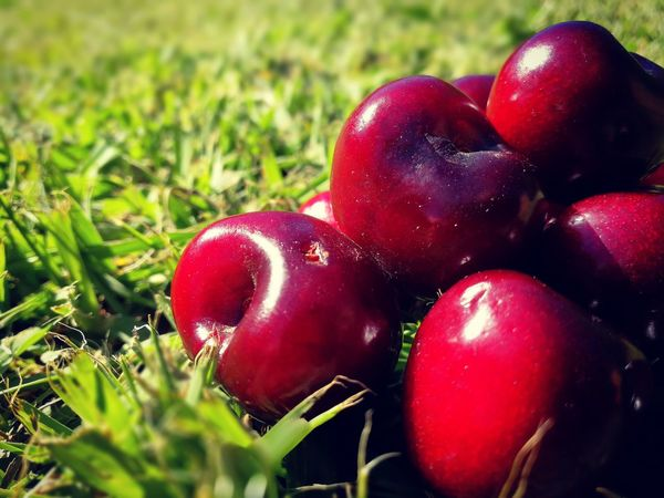 Red Healthy Eating Fruit Food And Drink Food Freshness Close-up Grass Nature Cherry Cherries🍒 Agriculture No People Growth Outdoors Day Ve