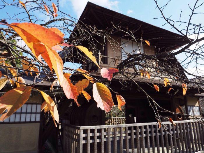 Kyoto Japan Sho-seien Boka-kaku Autumn Autumn Colors Leaves Olympus PEN-F 京都 日本 渉成園 東本願寺 傍花閣 紅葉 秋